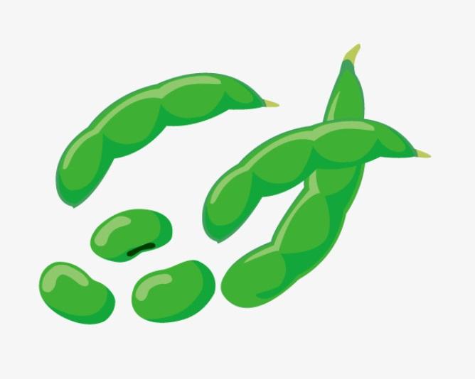 beans-fasulye-4-sinif-ingiilizce-kelimeler-testi