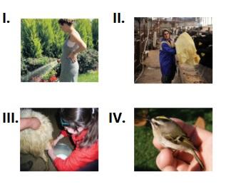 5. sınıf ingilizce 9. ünite soruları The Animal Shelter test çöz