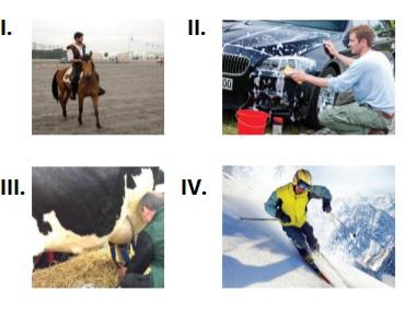 5. sınıf ingilizce The Animal Shelter testi çöz